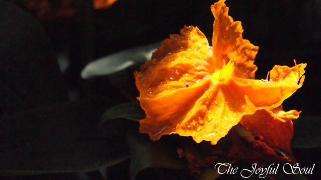 Botanical Gardens - Part 1/3 - Image 1/18
