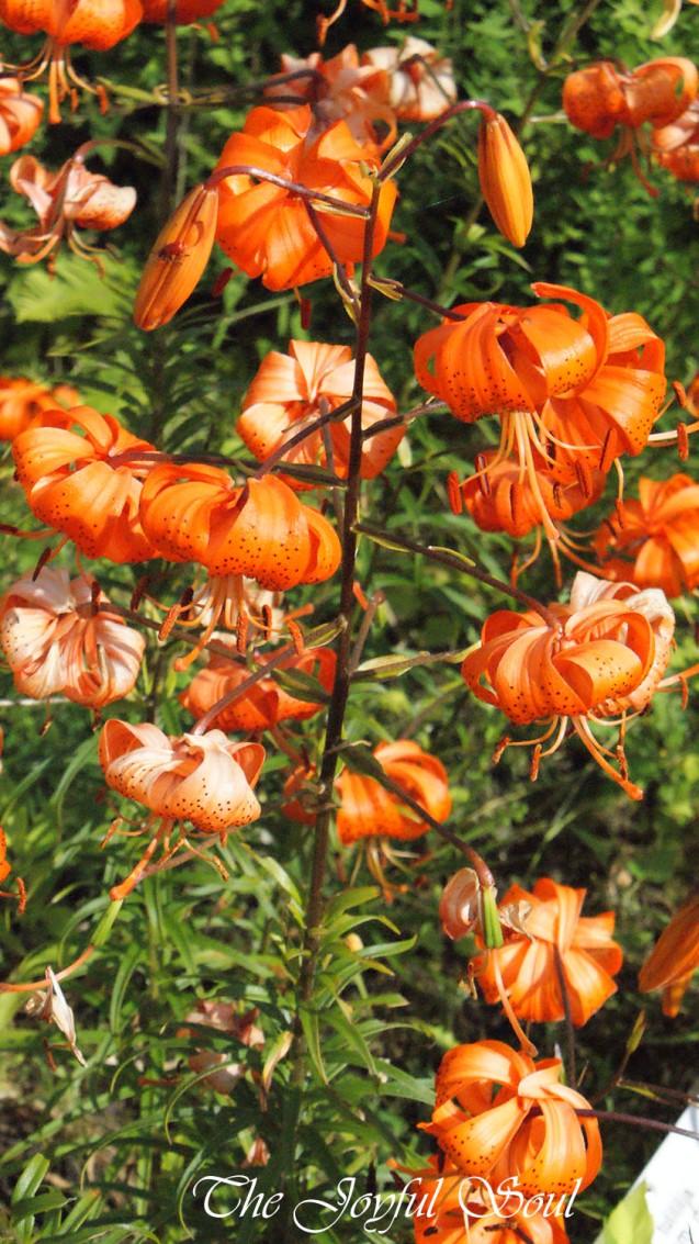 Botanical Gardens - Part 3/3 - Main Image